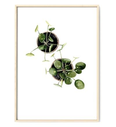 Pilea 02, Poster, Kunstdruck, Pflanzenposter, Pflanzenzeichnung, Pflanzen Aquarell - Pflanzen Aquarell, Pilea