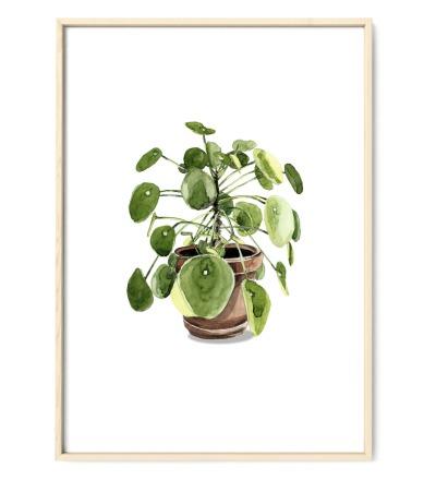 Pilea 03, Poster, Kunstdruck, Pflanzenposter, Pflanzenzeichnung, Pflanzen Aquarell - Pflanzen Aquarell, Pilea