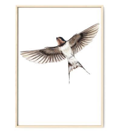 Rauchschwalbe Poster Kunstdruck - Buntstiftzeichnung Reproduktion