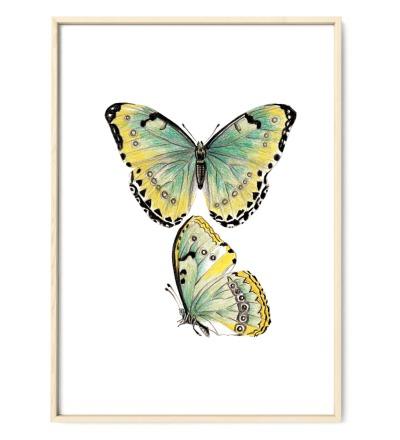 Zeichnung Schmetterlinge Poster Kunstdruck gelb-grün