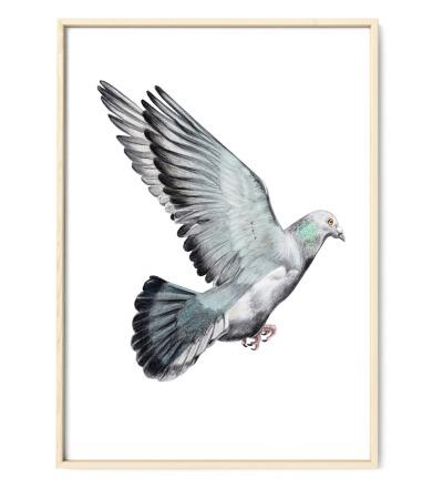 Taube Poster Kunstdruck - Bleistift-Buntstift-Zeichnung Reproduktion
