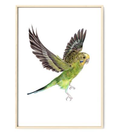 Wellensittich Poster Kunstdruck - Bleistift-Buntstift-Zeichnung Reproduktion