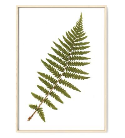 Farn, Poster, Kunstdruck, Art Print - gepresste Pflanze aus meinem Garten