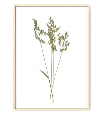 Gräser, Poster, Kunstdruck, Art Print - gepresste Pflanze aus meinem Garten