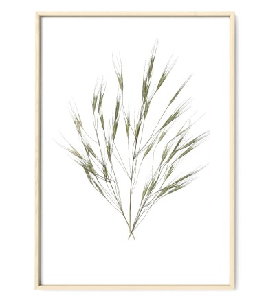 Gräser 02, Poster, Kunstdruck, Art Print - gepresste Pflanze aus meinem Garten