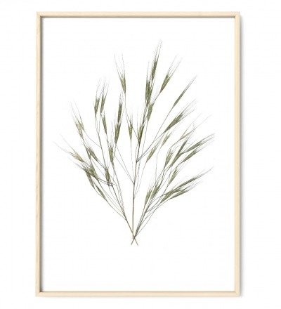 Gräser Poster Kunstruck DIN A4 gepresste