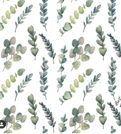 EP Eukalyptus