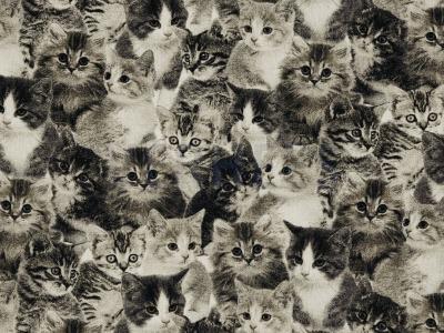 05 m Canvas schwarz mit Katzen
