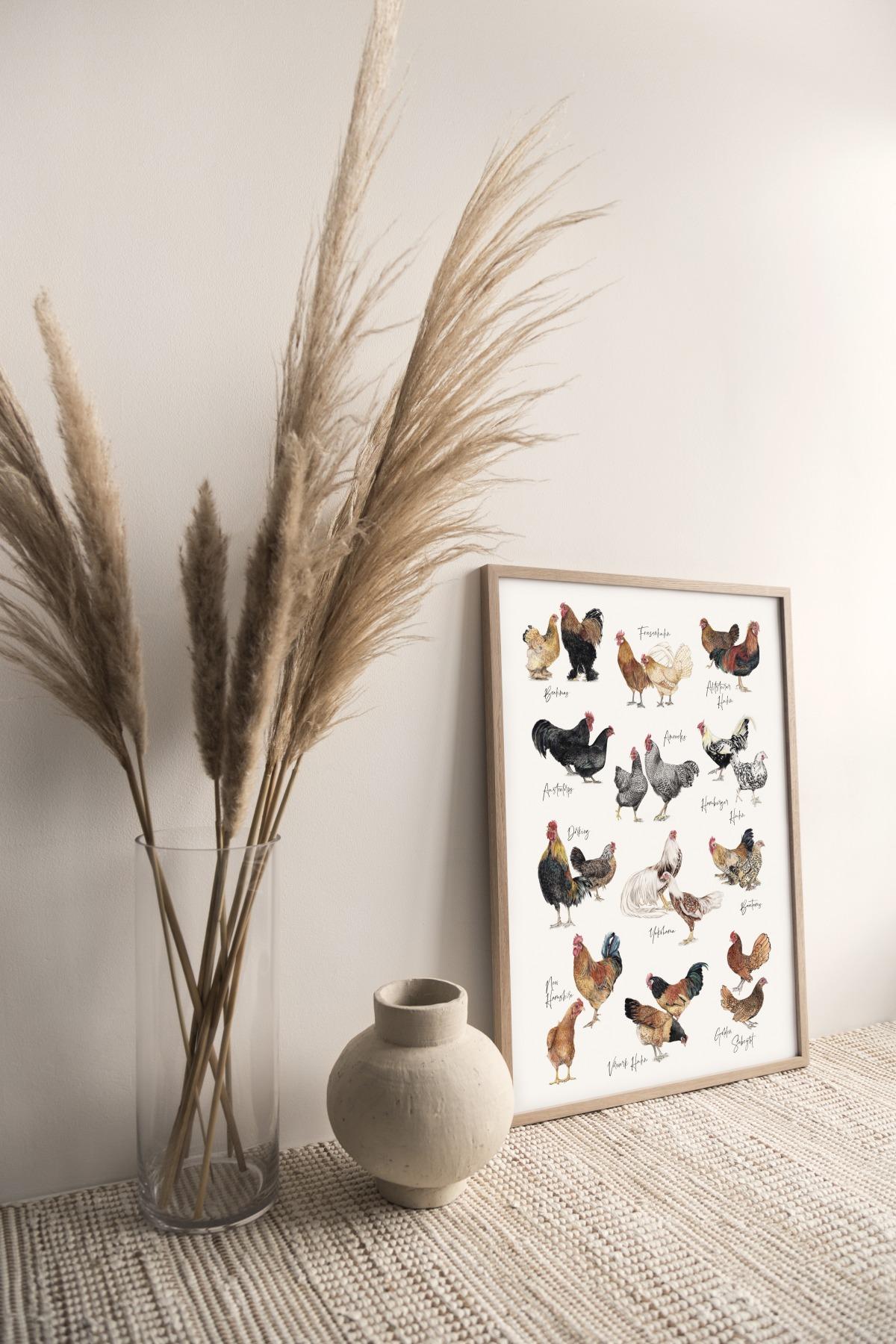 Hühnerarten Hühnerposter Poster Kunstruck DIN A3