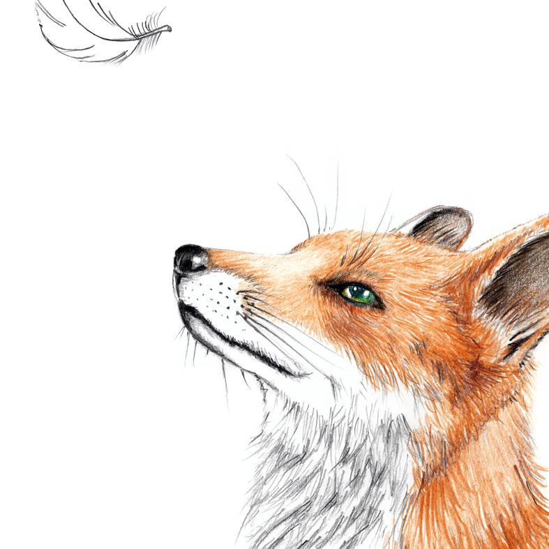 Fuchs mit Feder Poster Kunstdruck Zeichnung