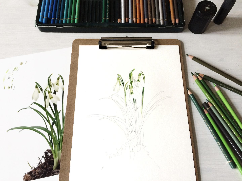 Schneeglöckchen Poster Kunstdruck Pflanzenposter Zeichnung 2