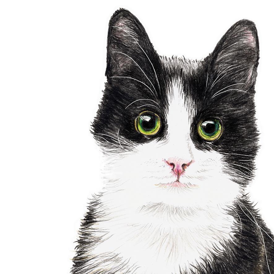 Katze Murmelauge Poster Kunstdruck Zeichnung 2