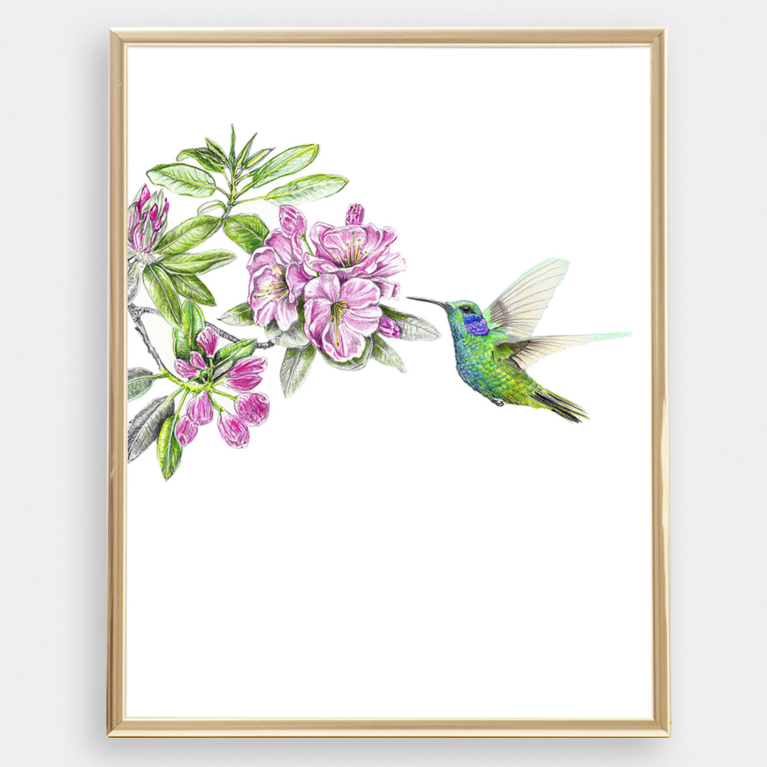 Kolibri Poster Kunstdruck Zeichnung 3