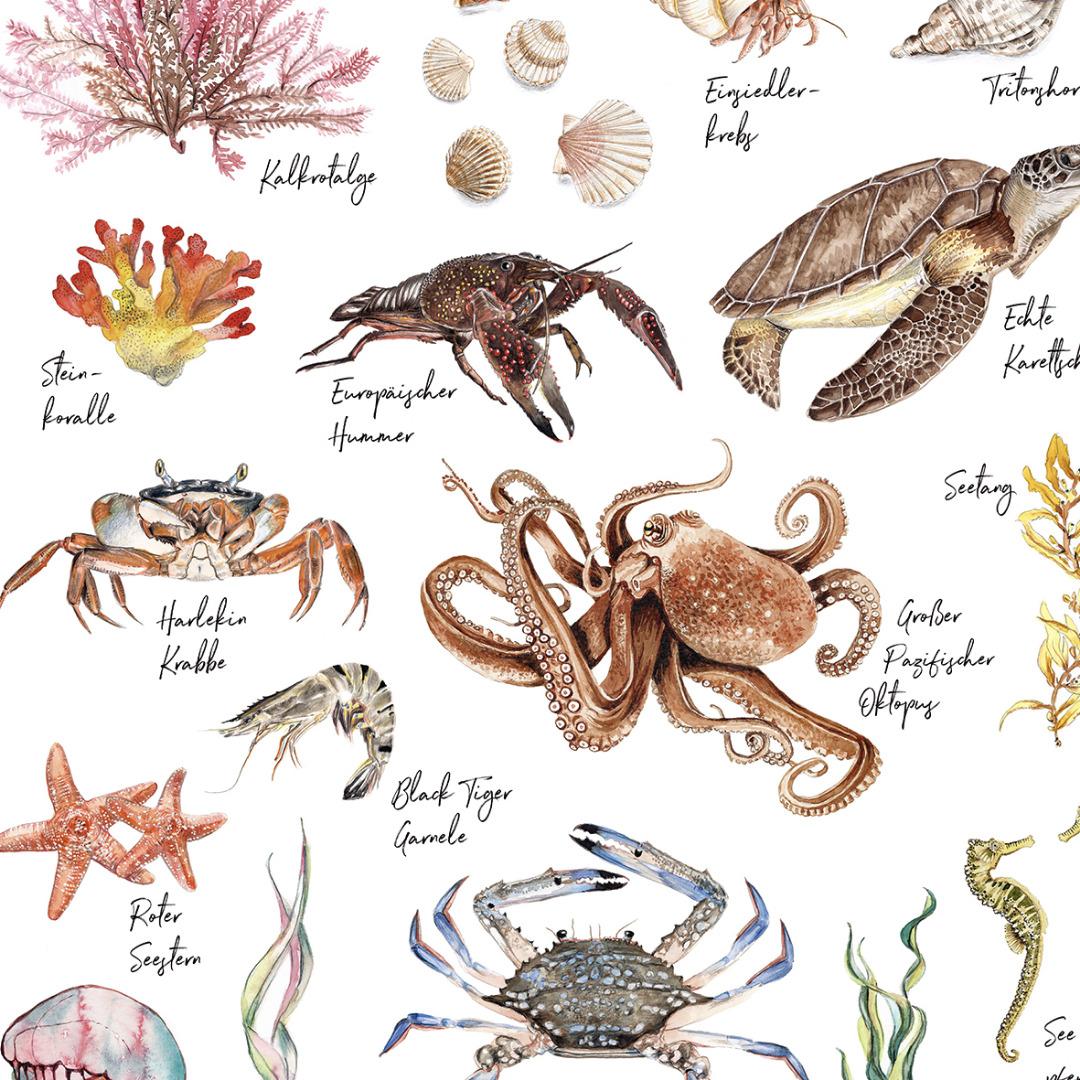 Meerestiere Poster Kunstdruck in DIN A3