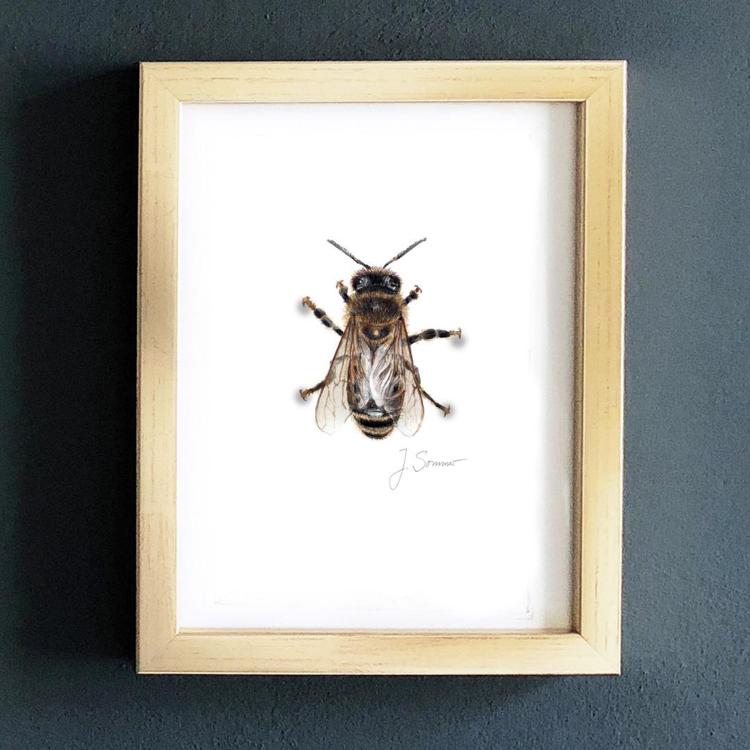 Biene 01 Zeichnung Kunstdruck DIN A5