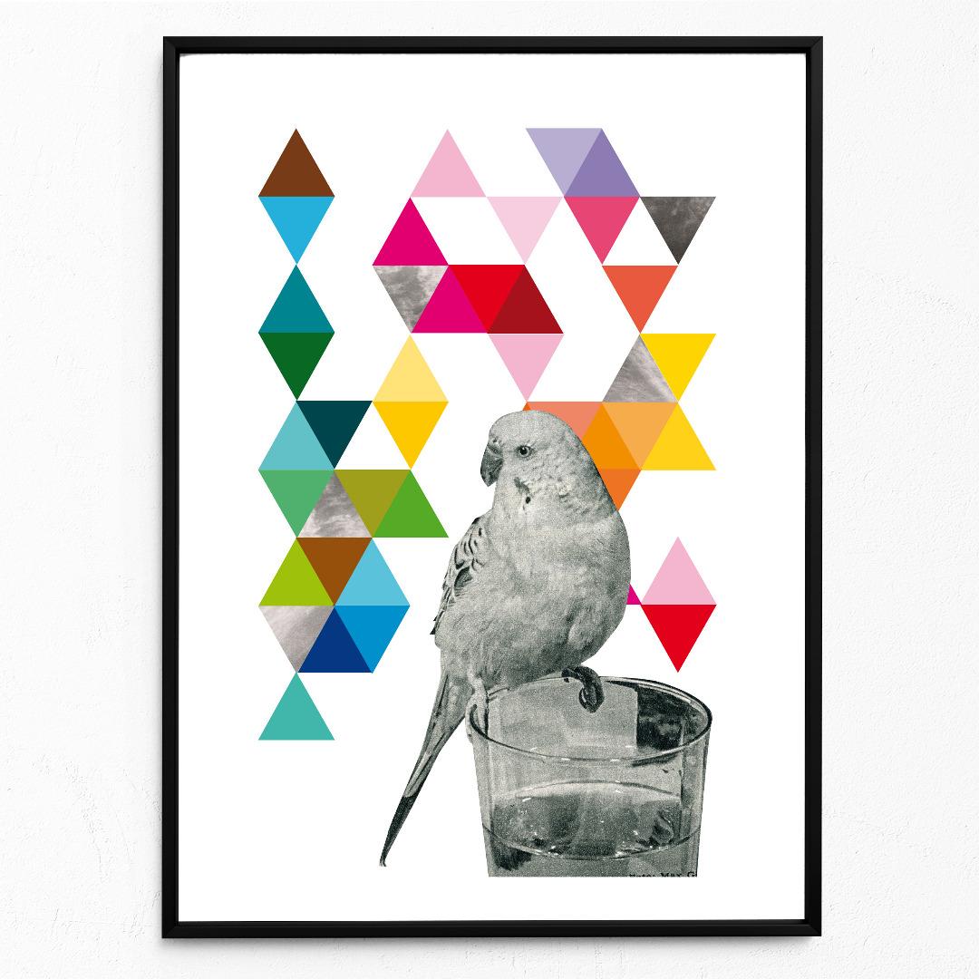 Wellensittich Poster Kunstdruck DIN A3