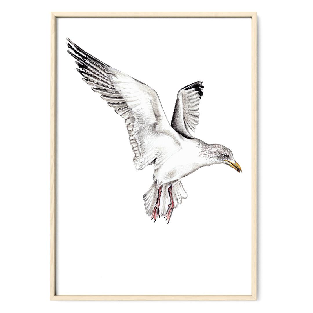 Möwe Poster Kunstdruck Zeichnung