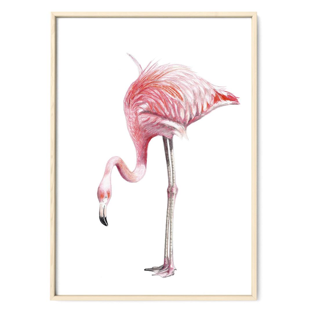 Flamingo Poster Kunstdruck Zeichnung