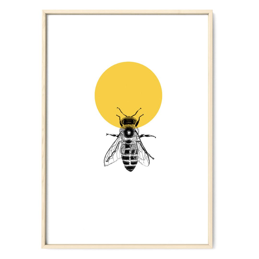 Honigbiene Poster Kunstdruck Zeichnung