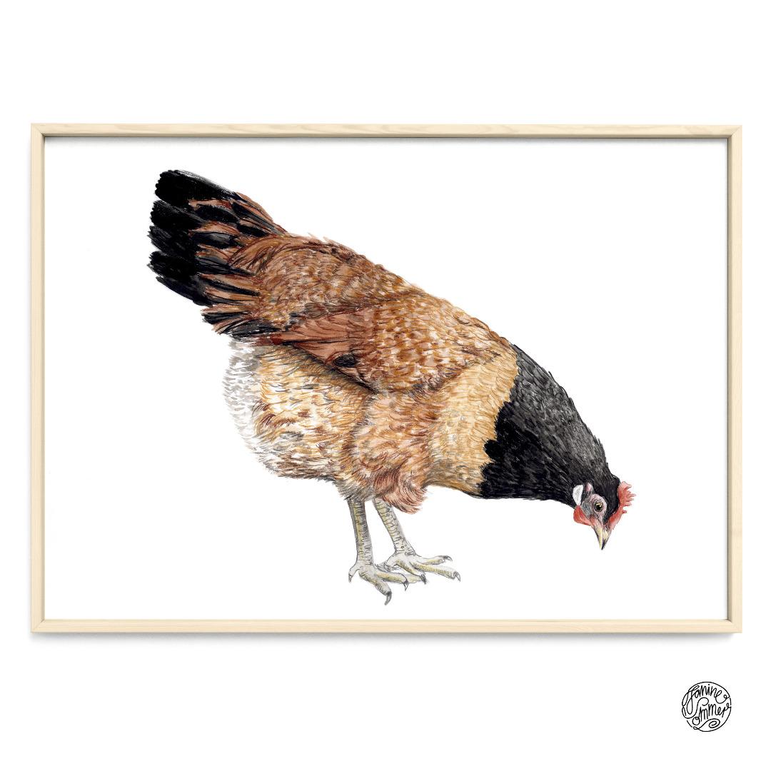 Vorwerk Huhn Poster Kunstruck Zeichnung