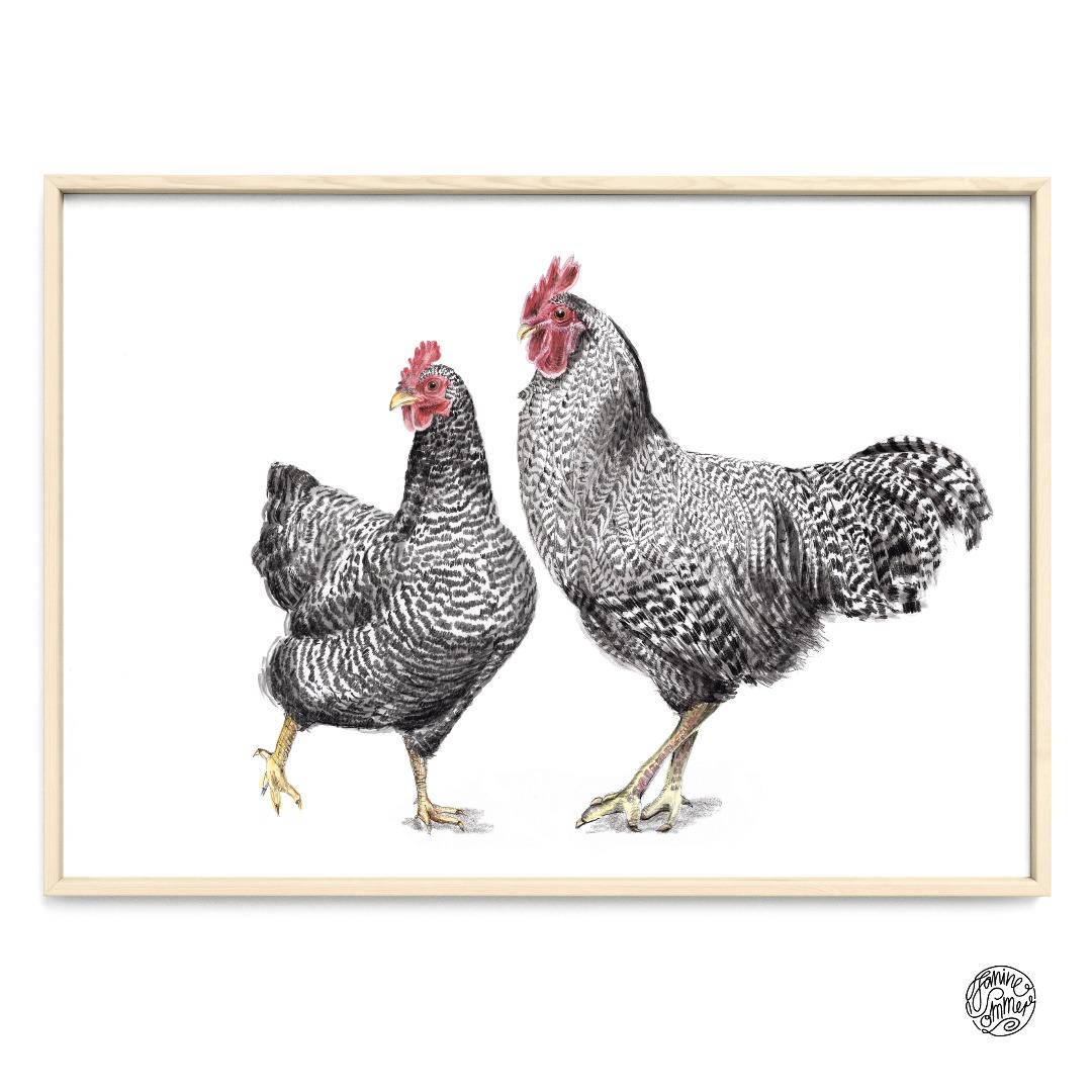 Amrocks Huhn und Hahn Poster Kunstruck