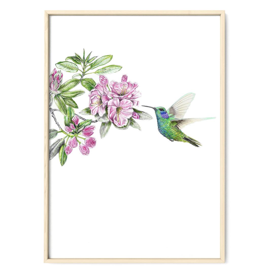 Kolibri Poster Kunstdruck Zeichnung