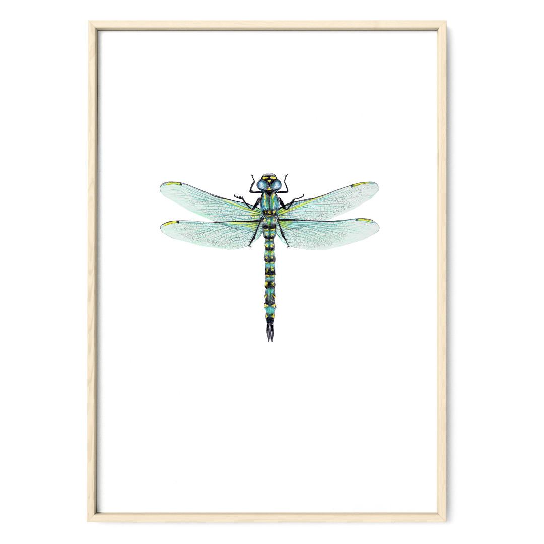 Libelle Poster Kunstdruck Zeichnung