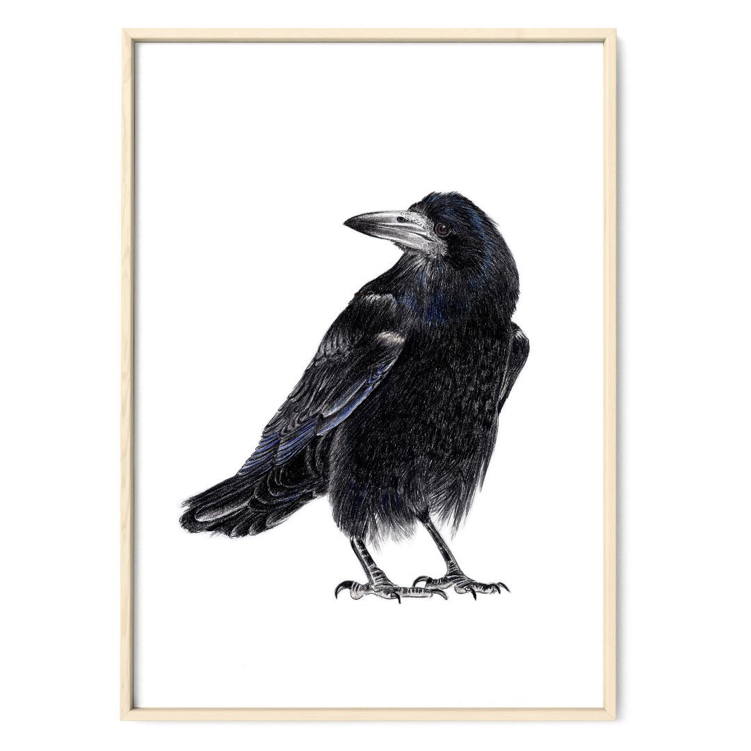Krähenvogel Poster Kunstdruck Zeichnung