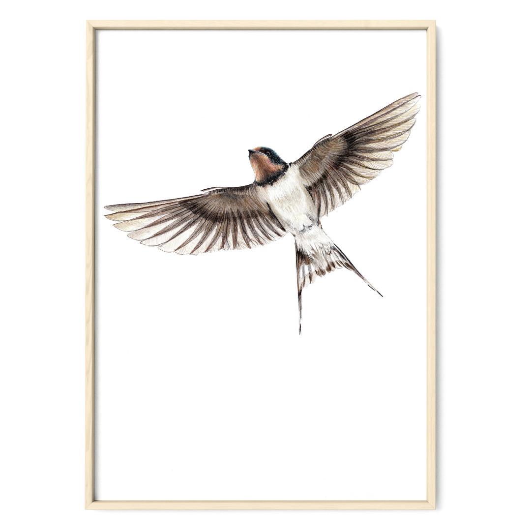 Rauchschwalbe Poster Kunstdruck Zeichnung