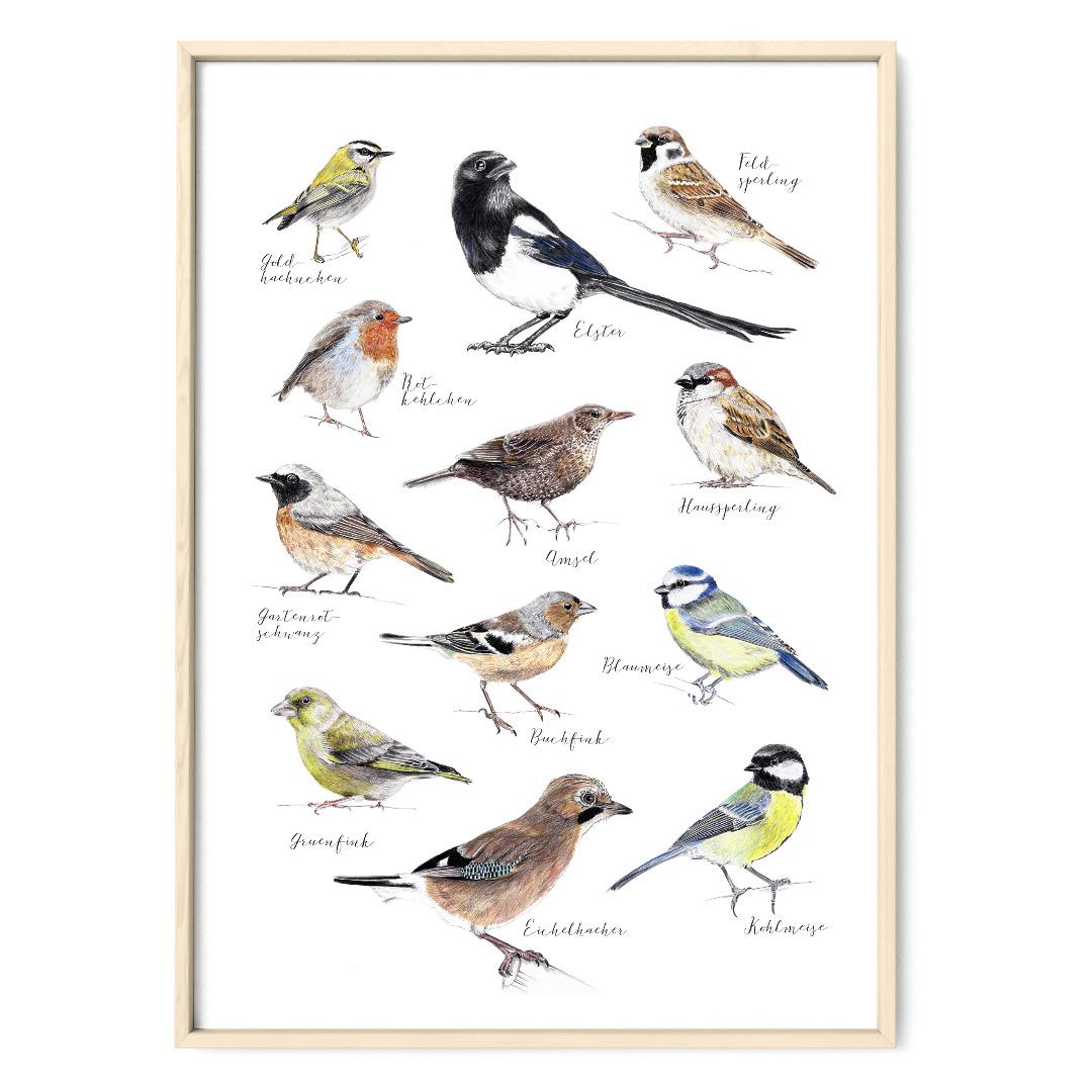 Vögel in Berlin Vogelzeichnungen Poster Kunstdruck