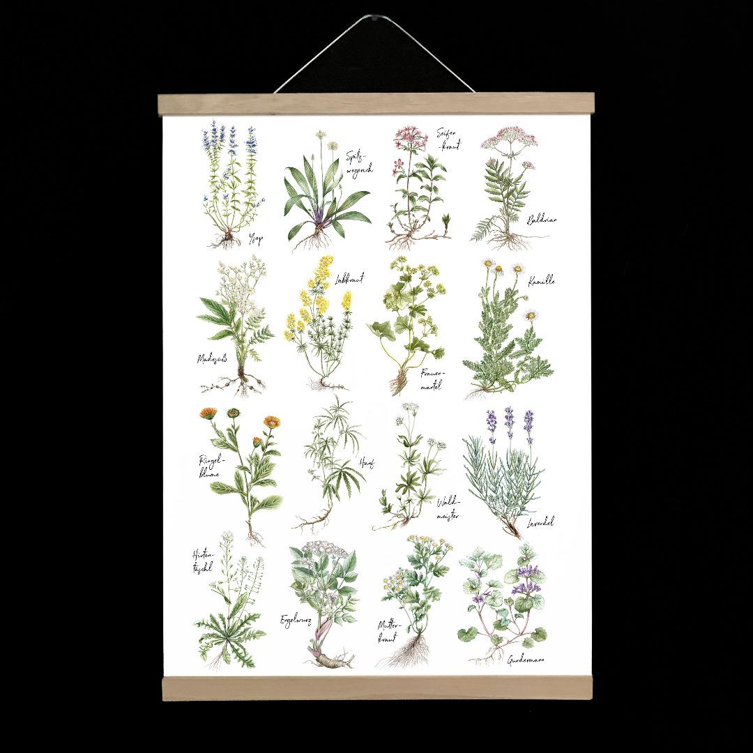 kleines Heilkräuter Poster Kunstdruck in DIN