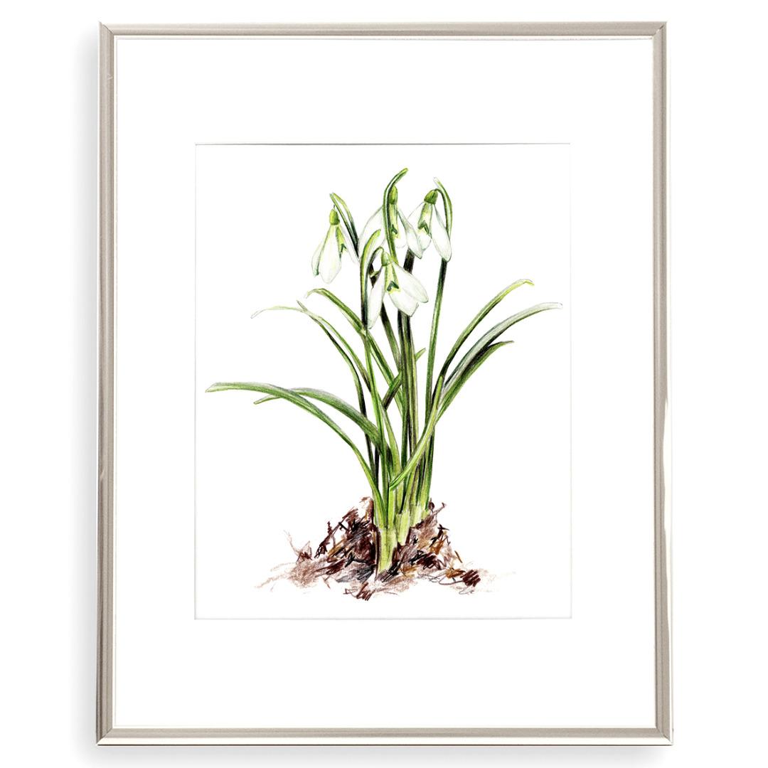 Schneeglöckchen Poster Kunstdruck Pflanzenposter Zeichnung 3
