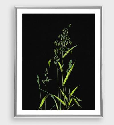 Gräser auf Schwarz Poster Kunstdruck Zeichnung