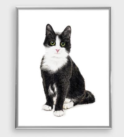 Katze Murmelauge Poster Kunstdruck DIN A3