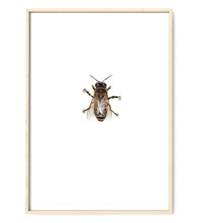 Biene Poster Kunstruck DIN A4 Aquarell-Buntstiftzeichnung