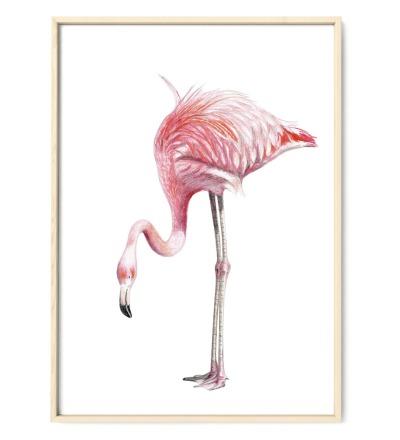 Flamingo Poster Kunstdruck Zeichnung Buntstiftzeichnung Reproduktion