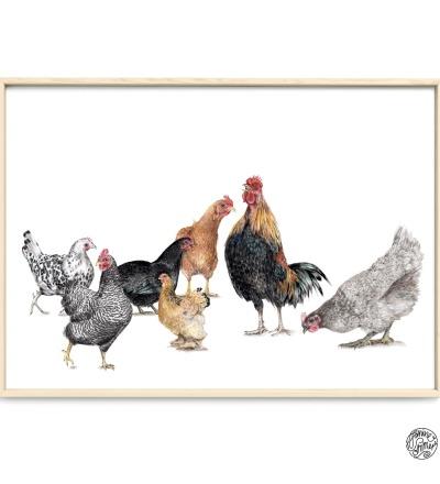 Hühner Poster Kunstdruck Zeichnung Buntsstiftzeichnung Reproduktion