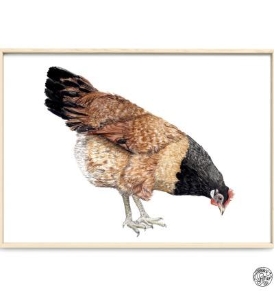 Vorwerk Huhn Poster Kunstruck Zeichnung Buntsstiftzeichnung