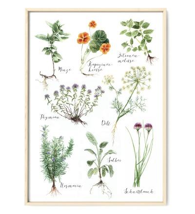Küchenkräuter Poster Kunstdruck DIN A3 Aquarell-Buntstiftzeichnung