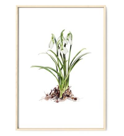 Schneeglöckchen Poster Kunstdruck Pflanzenposter Zeichnung Buntstiftzeichnung