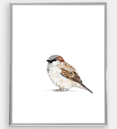 Spatz Haussperling Poster Kunstdruck DIN A4