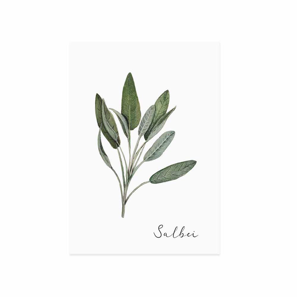 Postkarte - Salbei