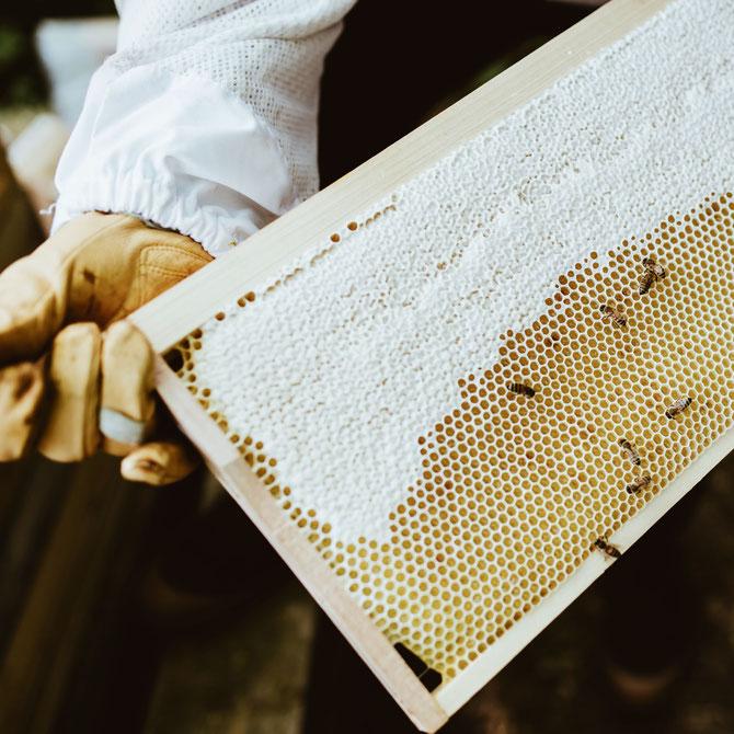 Raw Honey Ingwer 4