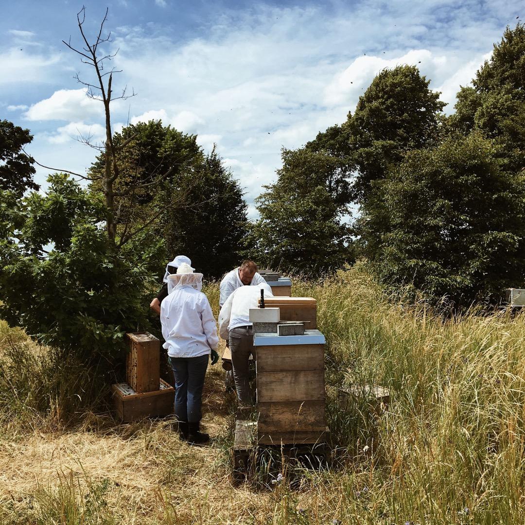 Raw Honey Ingwer 2
