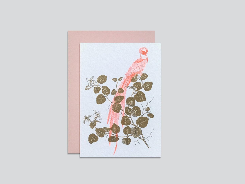 HungryPaper - Klappkarte - Vogel Quetzal