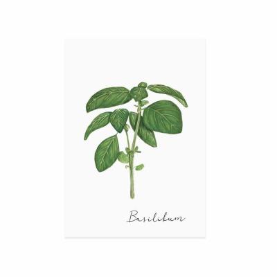 Postkarte - Basilikum - Eulenschnitt