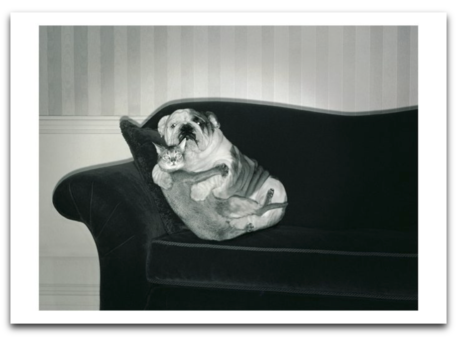 Dog & Cat Embrace Card