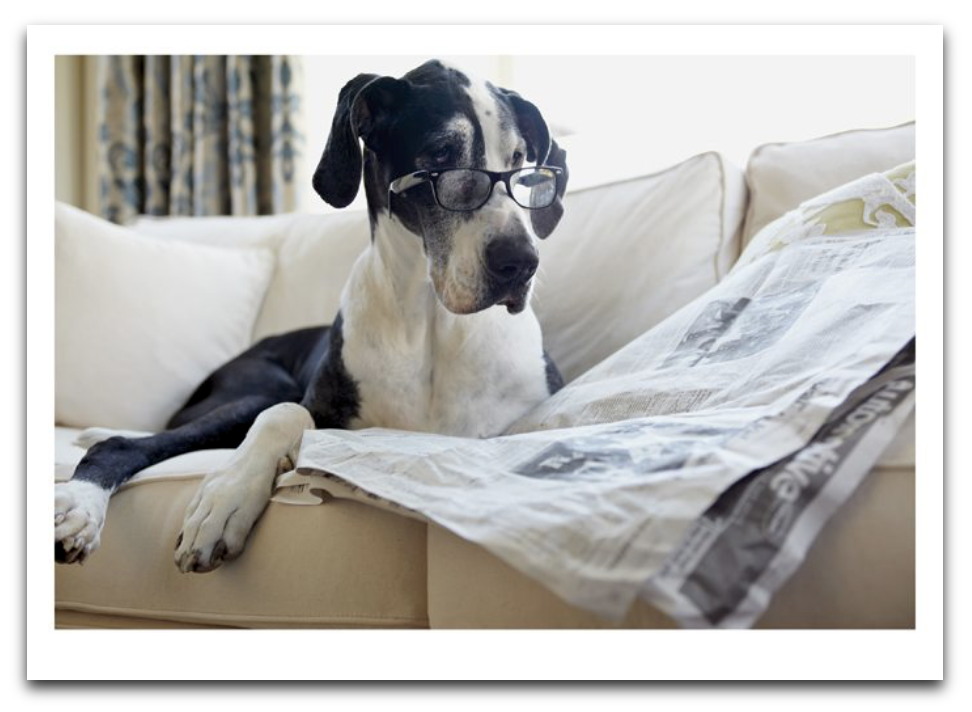 Dog Reading Paper Card
