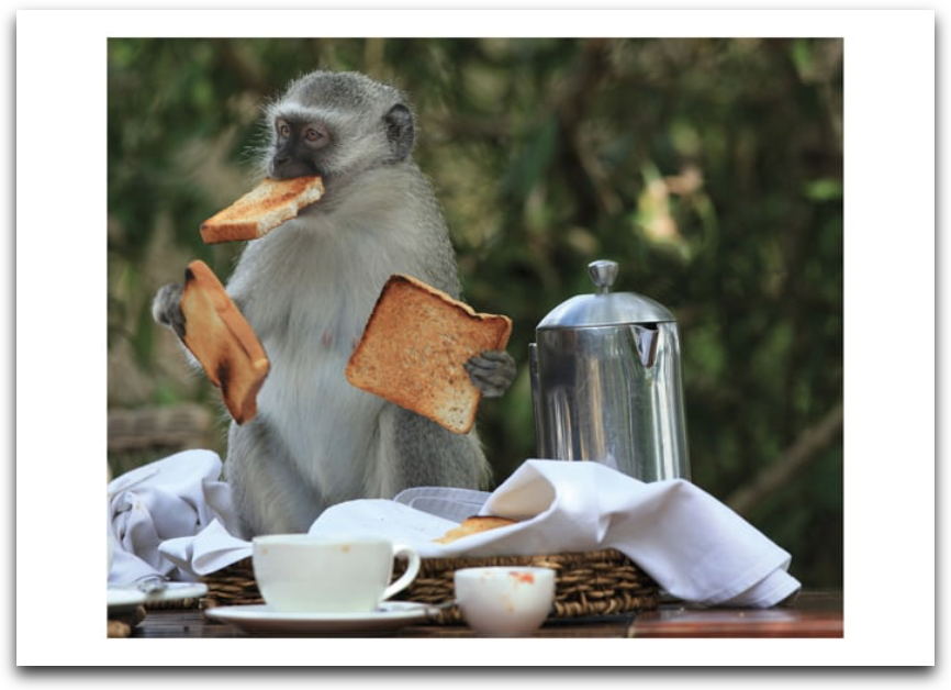 Monkeys Toast Card