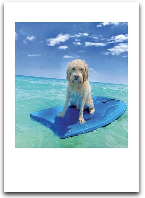 Being Wonder Dog Card